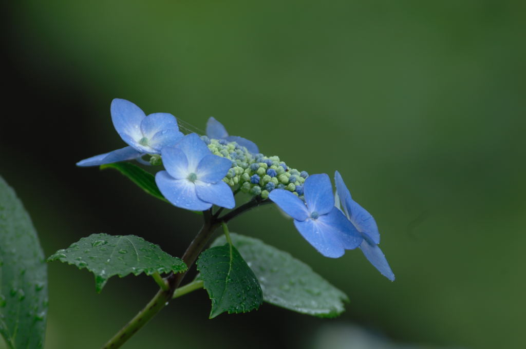 花植物_008