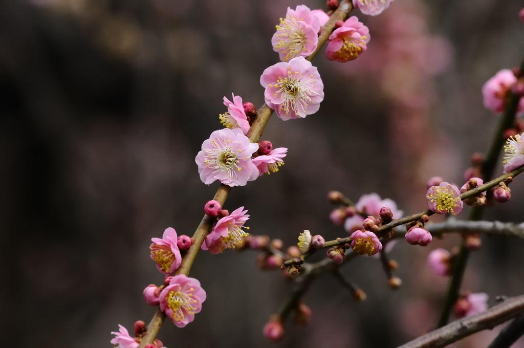花植物_017