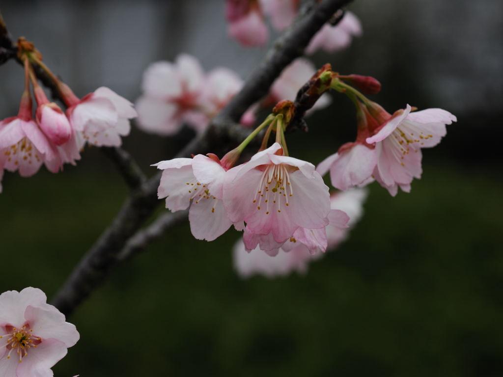 花植物_020