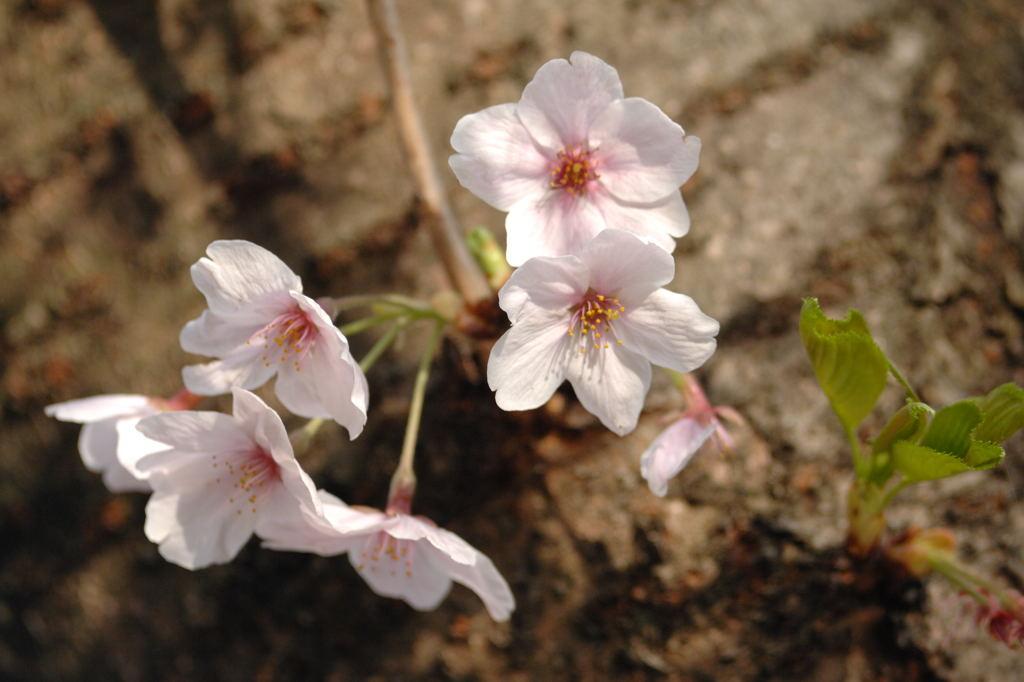 花植物_021