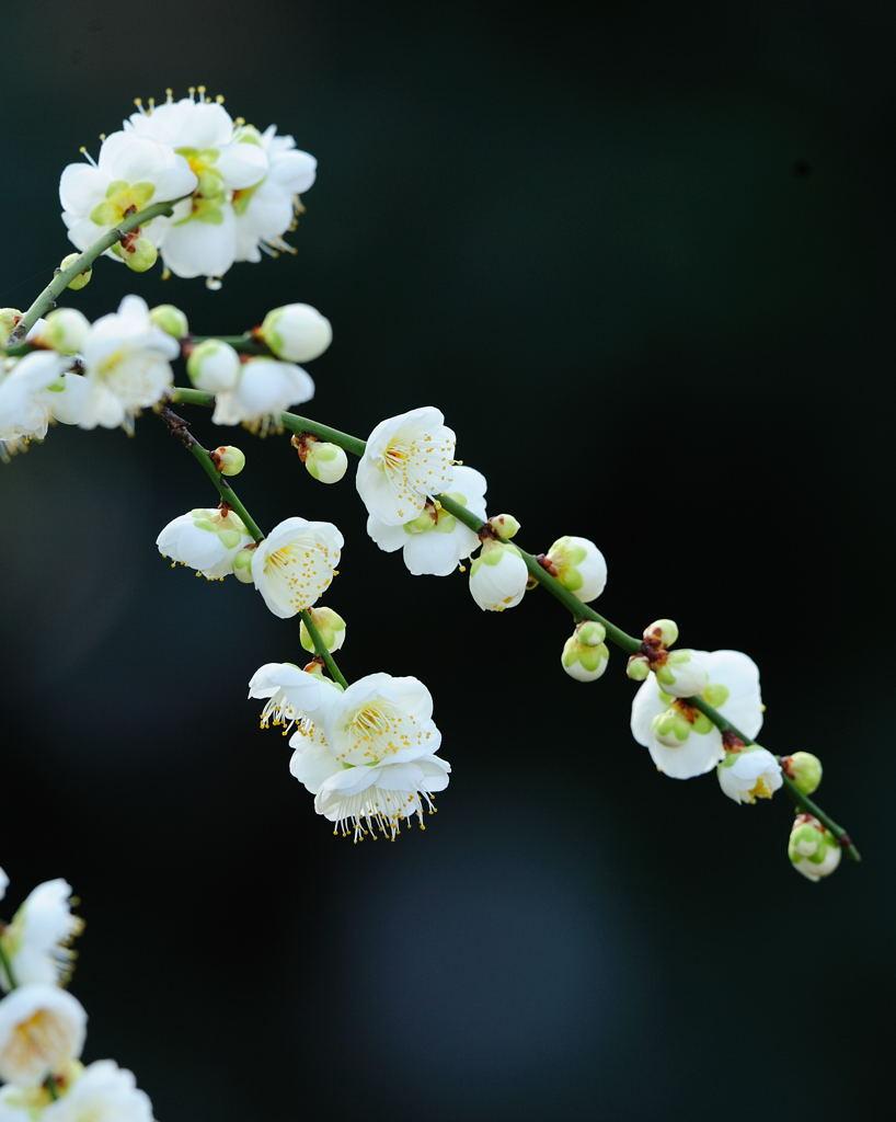 花植物_027