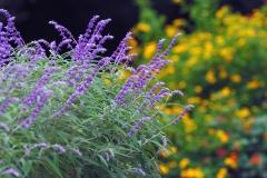 花植物_003