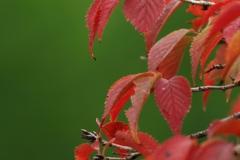 花植物_005