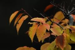 花植物_006
