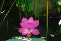 花植物_009