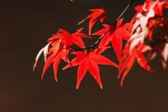 花植物_011