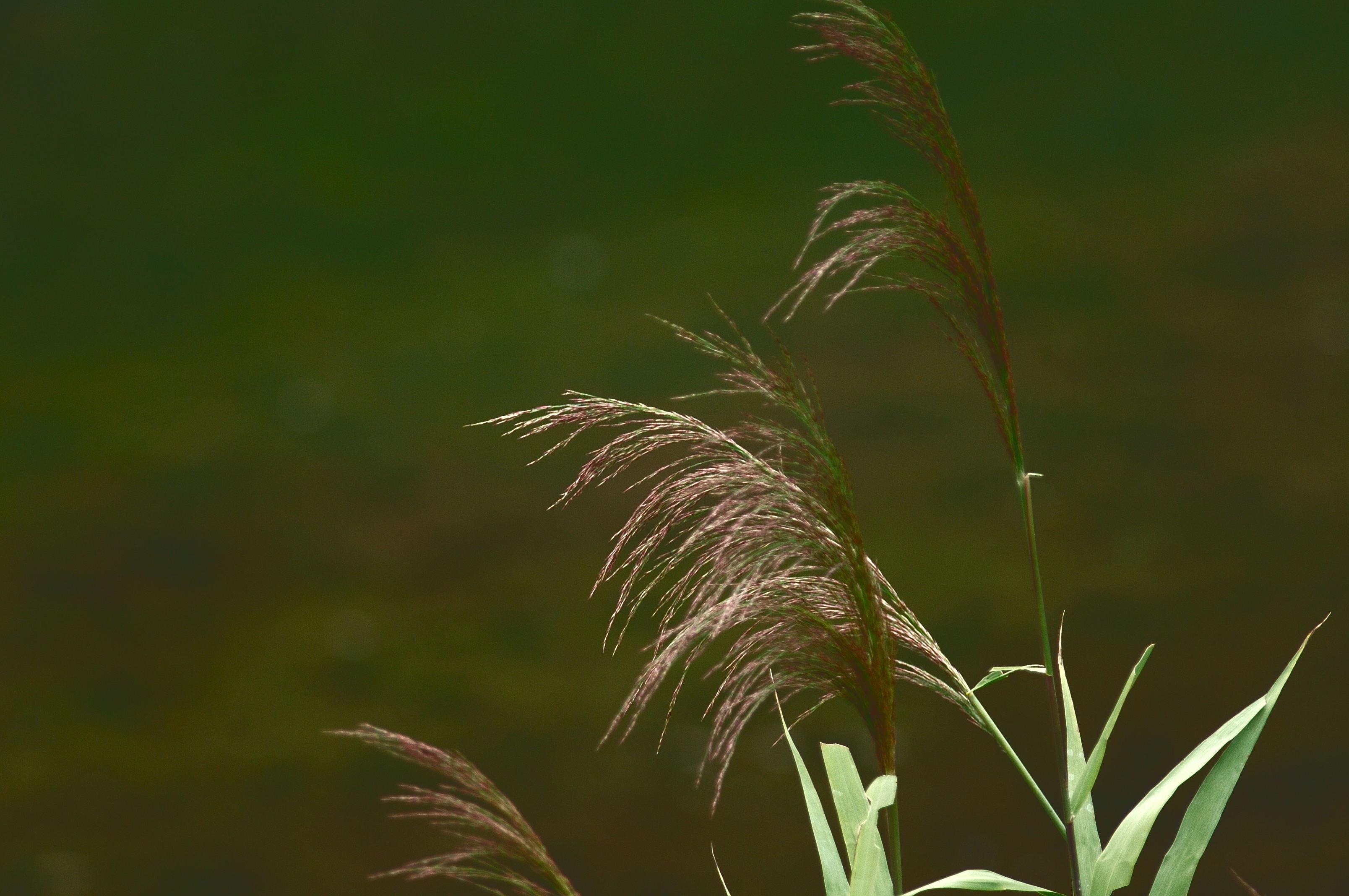 花植物_002