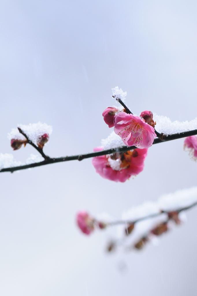 花植物_016