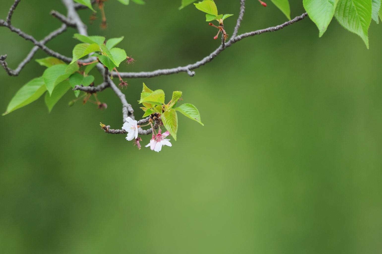 花植物_022