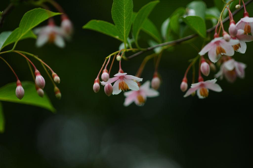 花植物_024