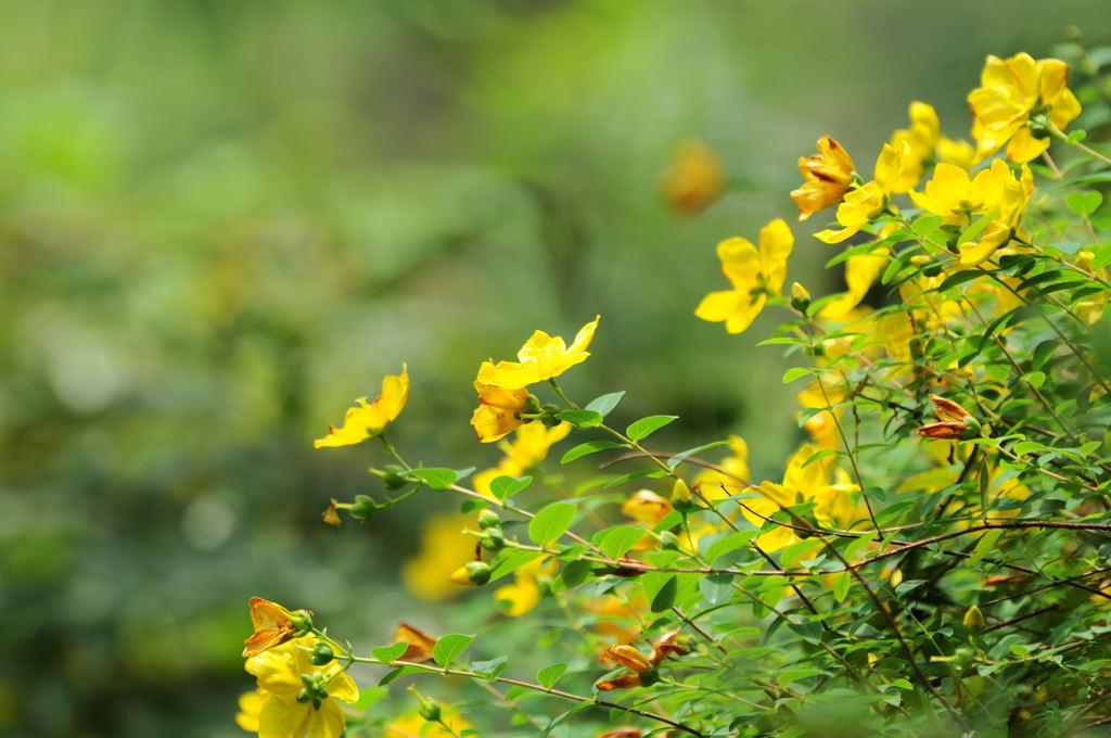 花植物_026