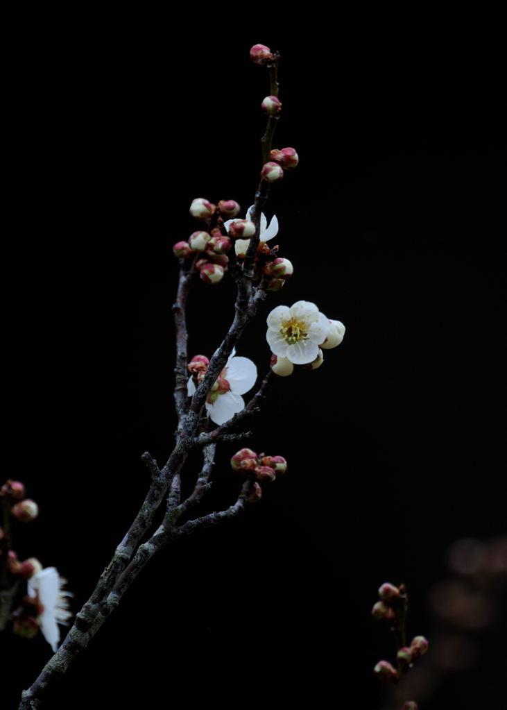 花植物_029