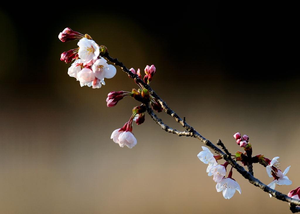 花植物_030