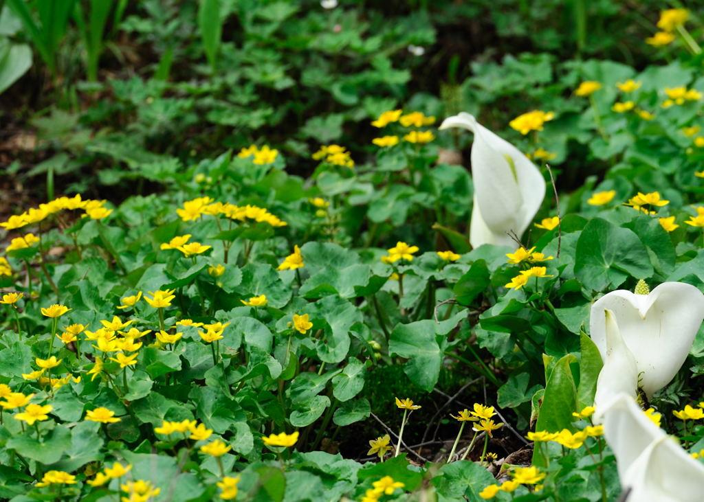 花植物_031