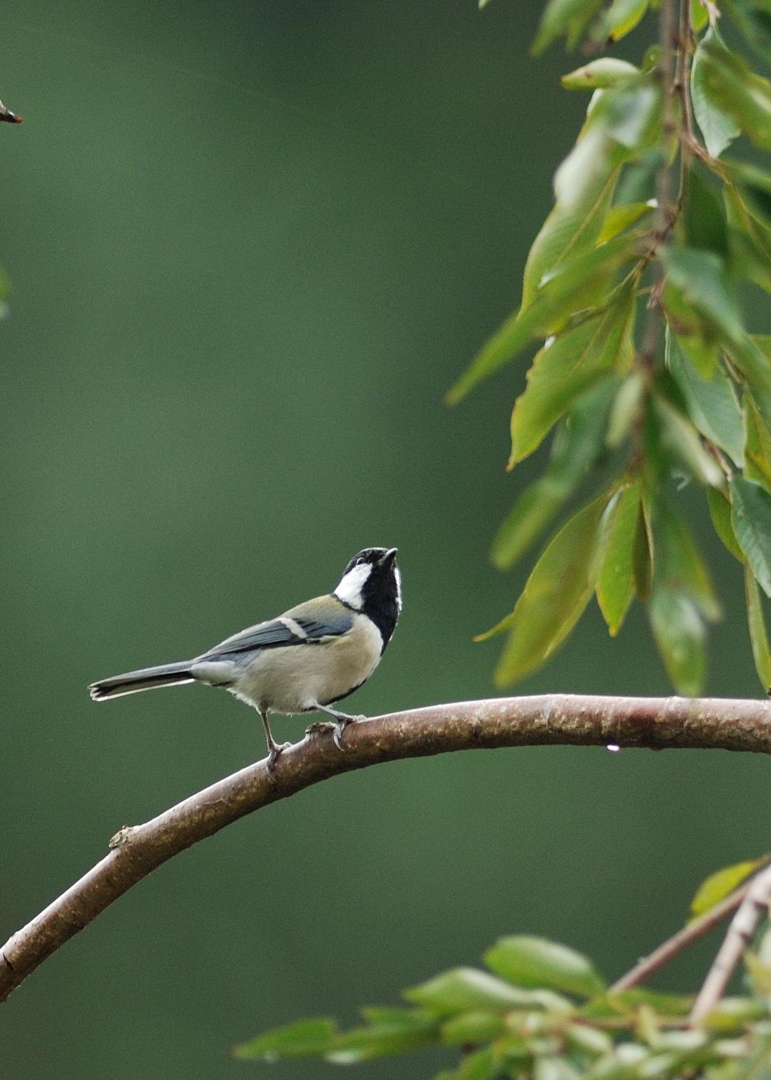 野鳥_001